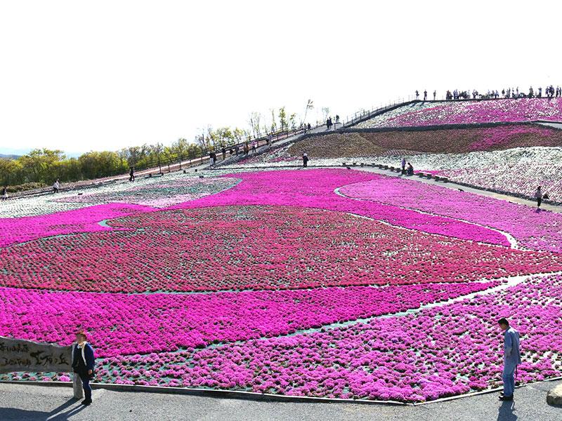 20140524_芝桜
